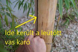 bambusz gondozása