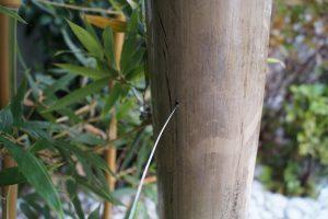 kertépítés bambusszal
