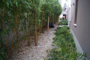 bambuszt is lehet metszeni