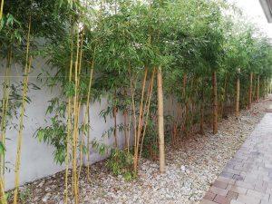 bambuszok a kertben