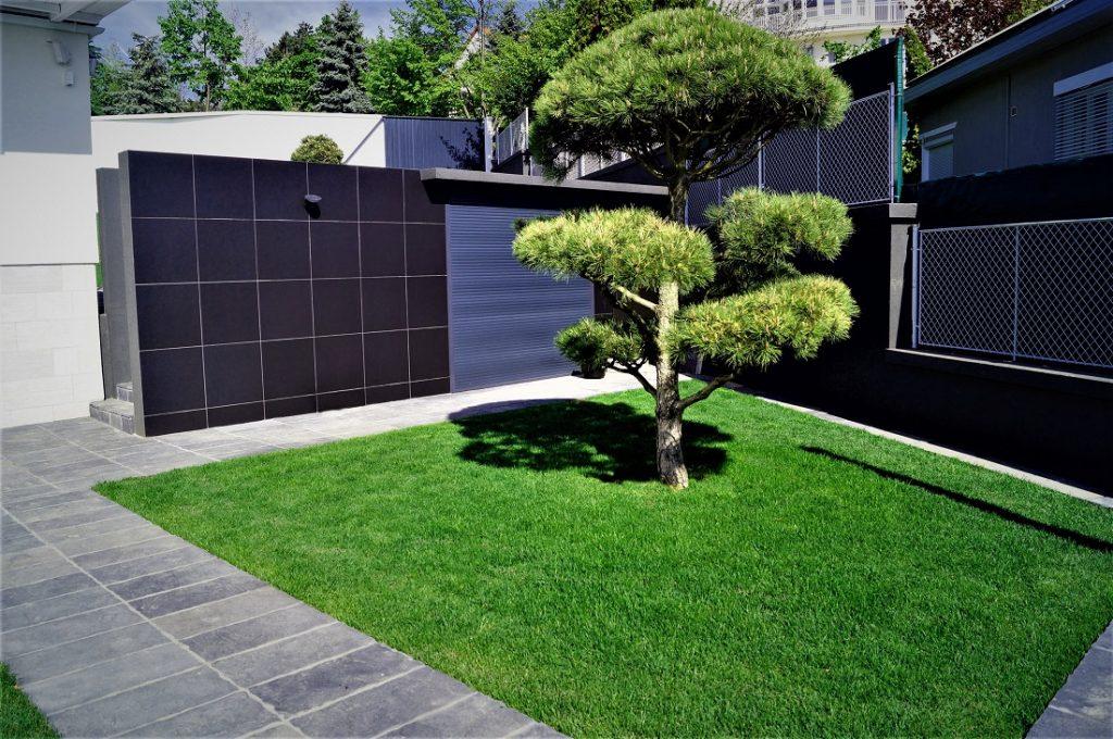 még egy kép a bonsai-ról