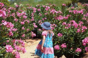 leander a mediterrán kertek növénye
