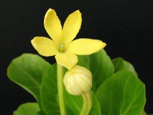 exklúzív beltéri növény
