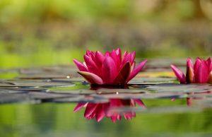 kerti tó szépsége